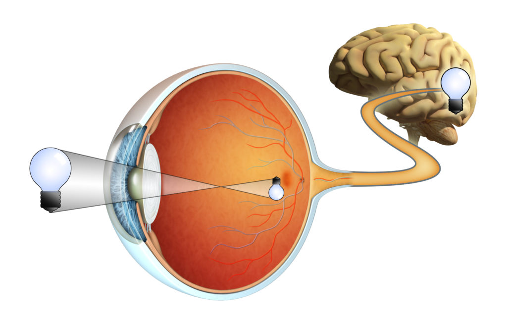 Retina - Retina Specialists - Louisiana Eye & Laser